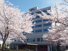 桜満開の校舎